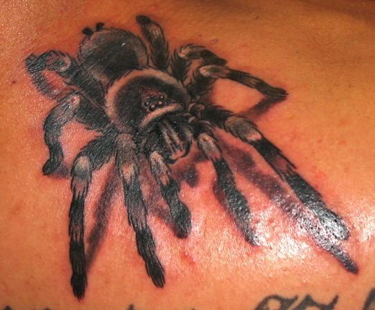 Tatuagens de aranhas (9)