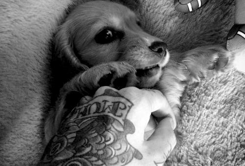 Pessoas Tatuadas com Cães de estimação (46)