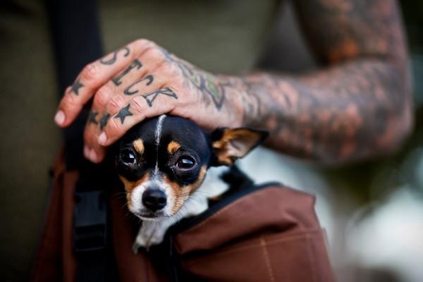 Pessoas Tatuadas com Cães de estimação (36)