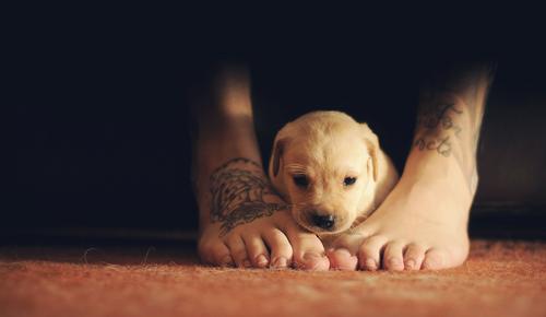 Pessoas Tatuadas com Cães de estimação (26)