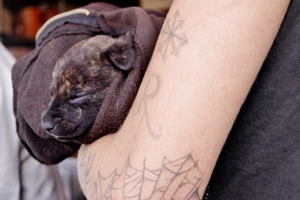Pessoas Tatuadas com Cães de estimação (17)