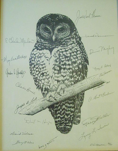 Tatuagens criativas de corujas (119)