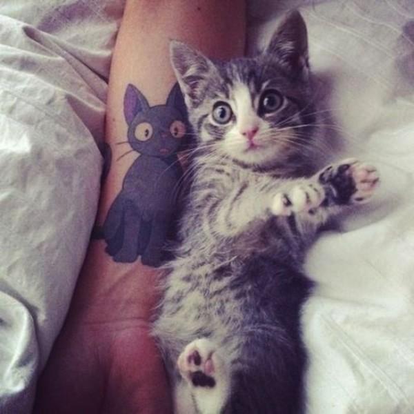 Lindas tatuagens de gatos 15